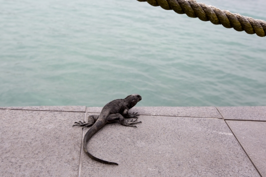 Galapagos_099