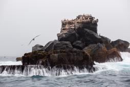 Galapagos_103