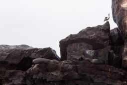 Galapagos_104