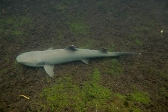 Galapagos_115