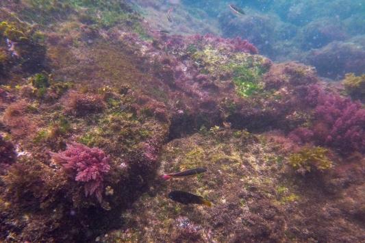 Galapagos_118