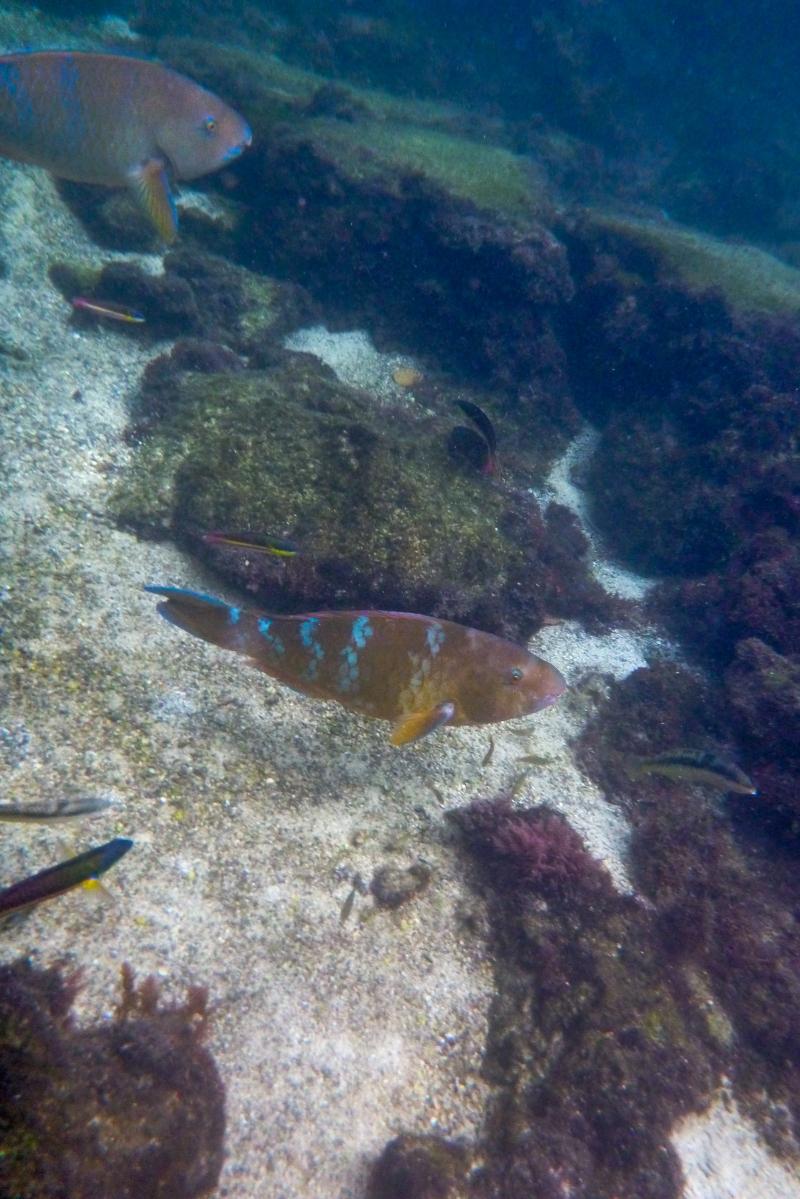 Galapagos_119
