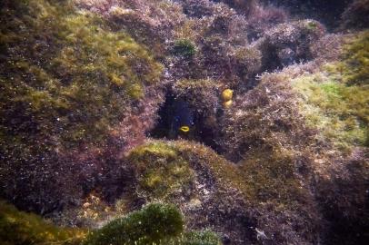 Galapagos_120