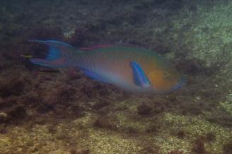 Galapagos_126