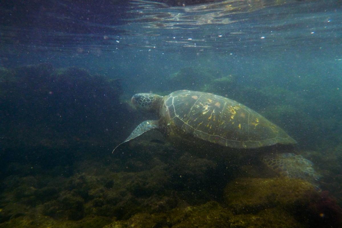 Galapagos_128