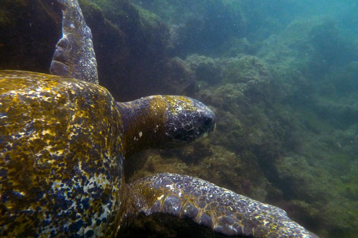 Galapagos_131