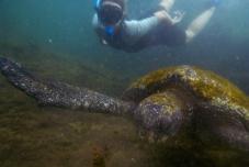 Galapagos_132
