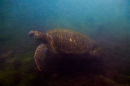 Galapagos_143