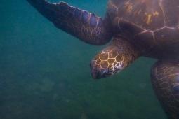 Galapagos_147