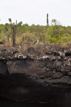 Galapagos_159