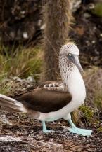 Galapagos_162