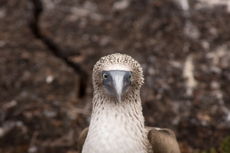 Galapagos_165