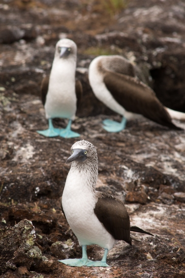 Galapagos_168