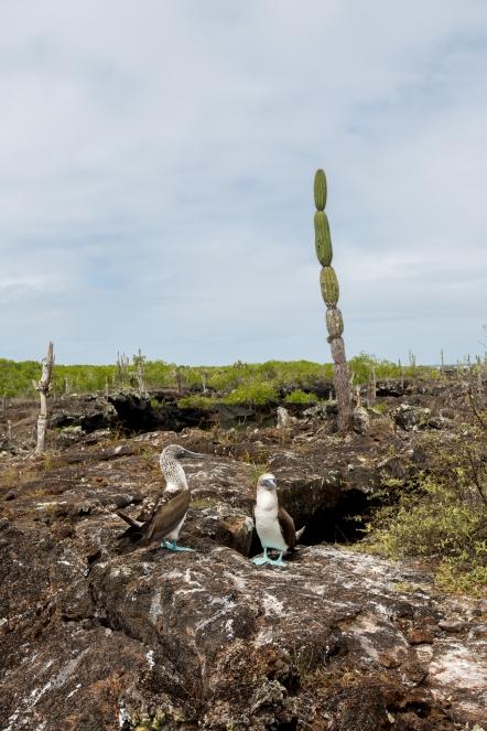 Galapagos_174