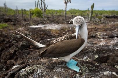 Galapagos_175