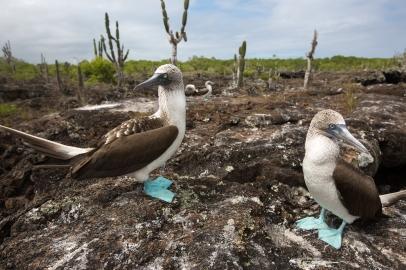 Galapagos_176