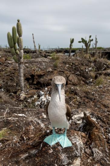 Galapagos_177