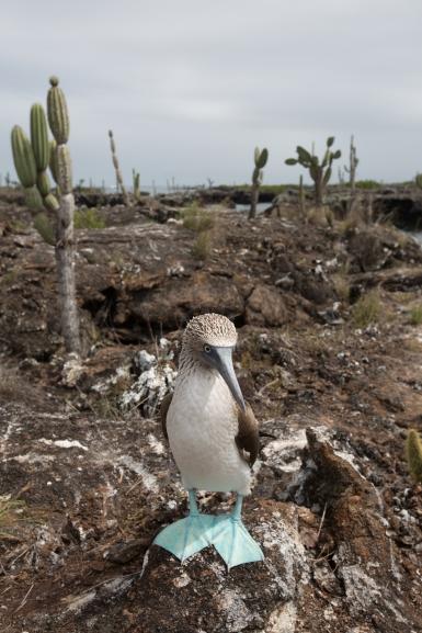 Galapagos_178