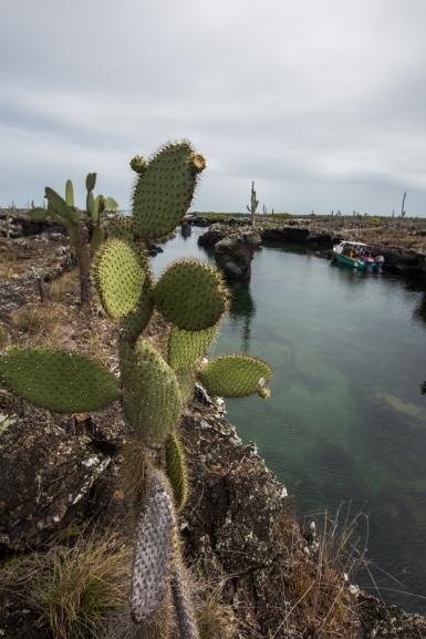Galapagos_179