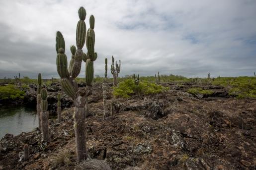 Galapagos_180