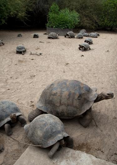 Galapagos_199