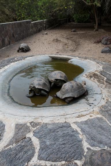 Galapagos_200