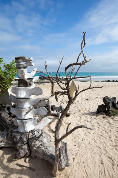 Galapagos_250