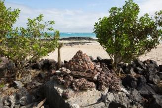 Galapagos_252