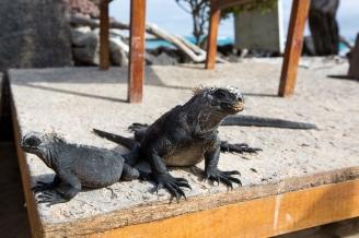 Galapagos_253