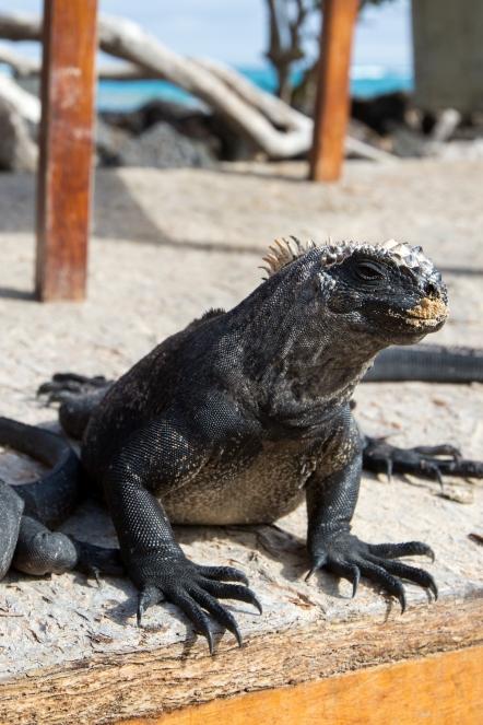 Galapagos_254