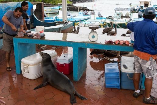 Galapagos_259