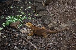 Galapagos_262