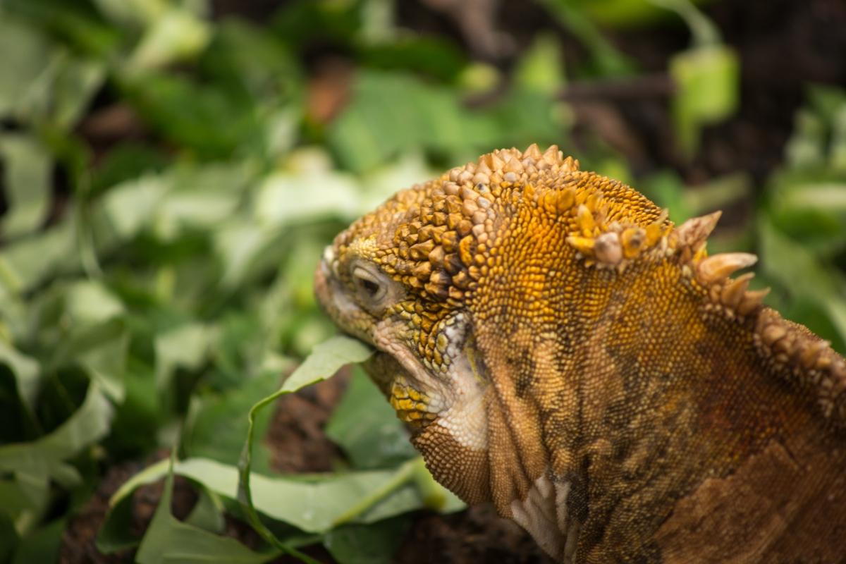 Galapagos_264