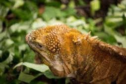 Galapagos_265