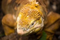 Galapagos_266
