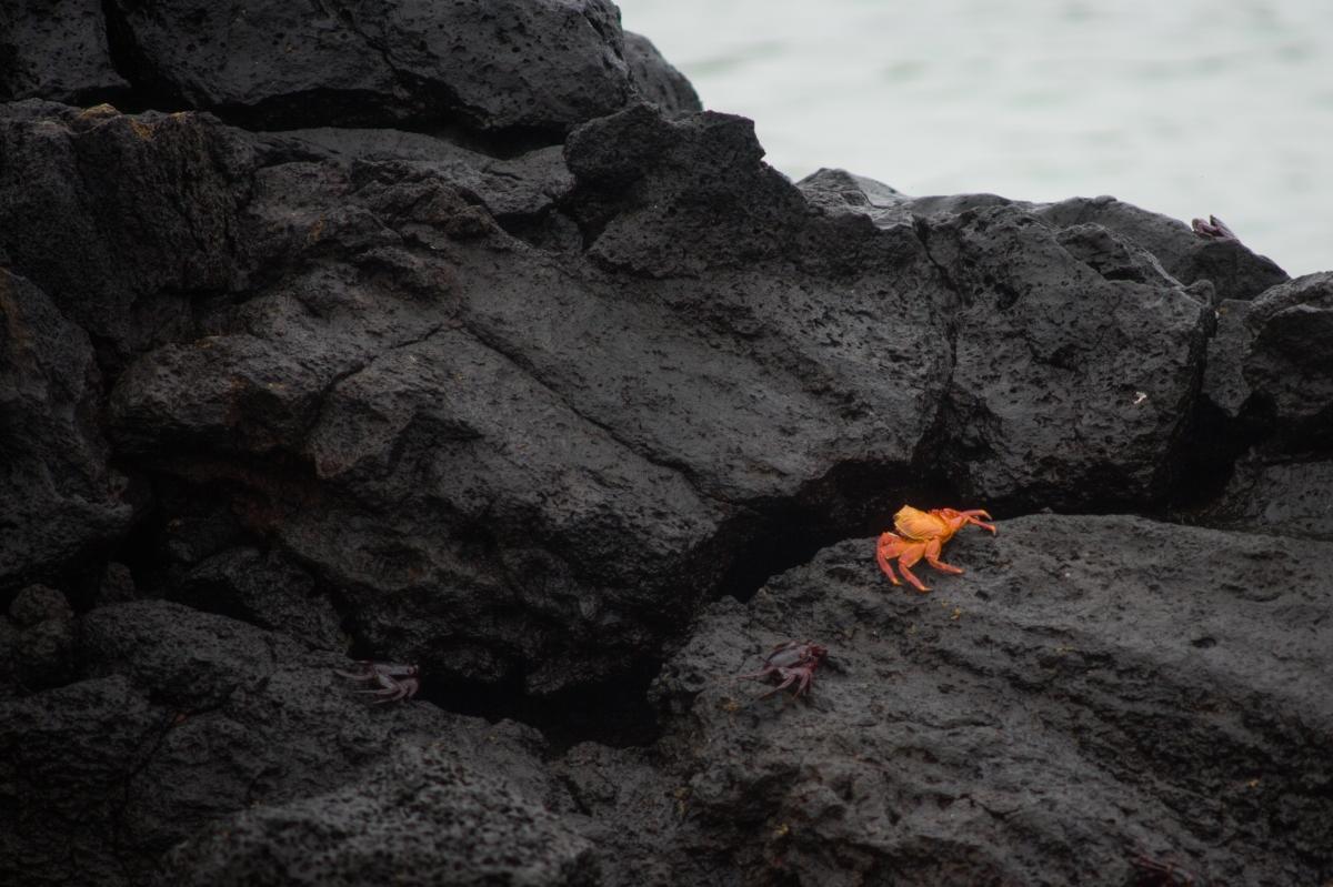 Galapagos_270