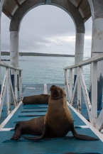Galapagos_276