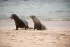 Galapagos_282