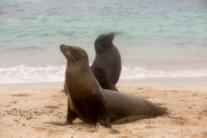 Galapagos_284