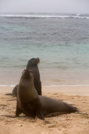 Galapagos_285