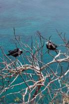 Galapagos_346