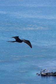 Galapagos_348