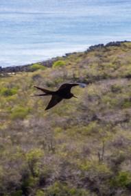 Galapagos_349