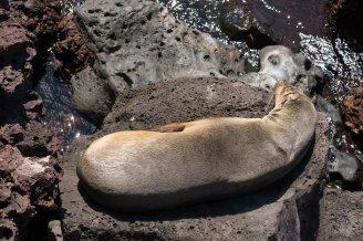 Galapagos_355