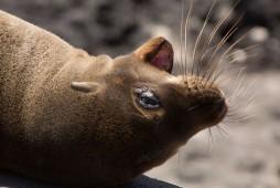 Galapagos_357
