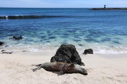 Galapagos_367