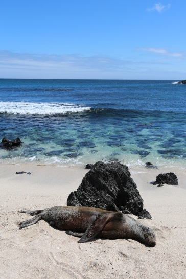Galapagos_368